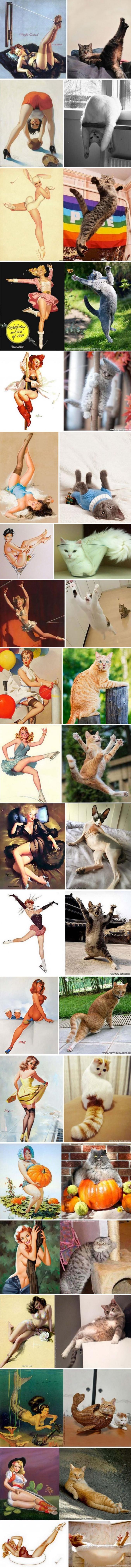 Des chats, des chats, des chats !