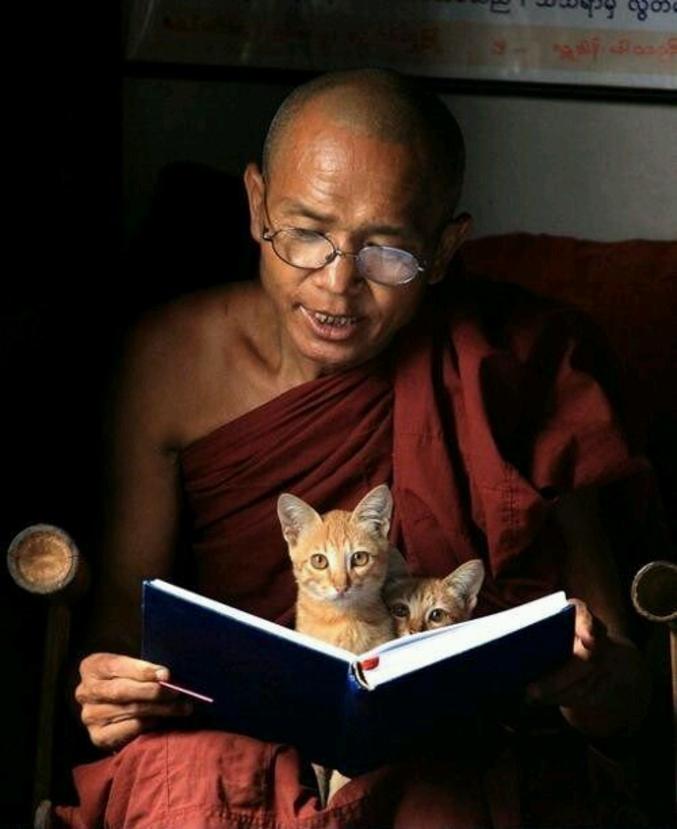 Ou comment désamorcer la violence dès le plus jeune âge, rien ne vaut les histoires de chat au lit(ne).