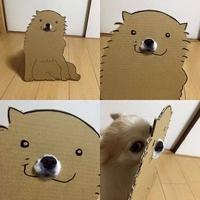 Qu'est-ce qui se cache derrière un chien en carton ?