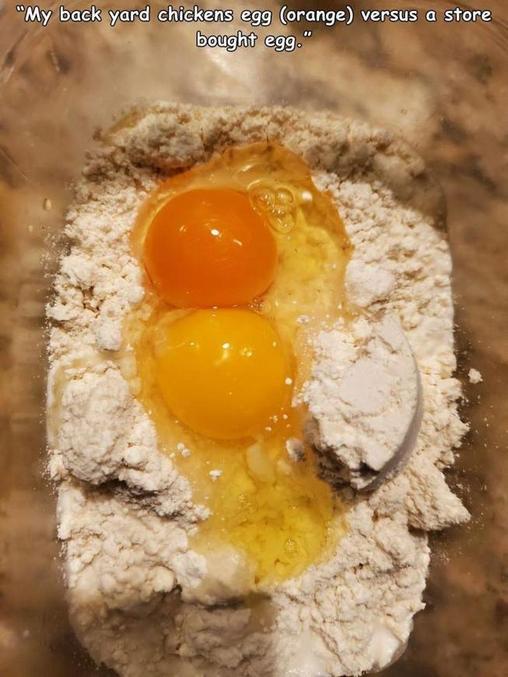 ... qu'il est orange. Et sûrement meilleurs à tout point de vue. A noter que les oeufs retrouvent la faveur des nutritionistes...