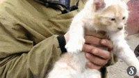 Le nouveau chatmortisseur