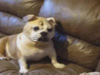 Le chien d'Ethan Hunt