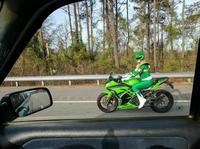Le Ranger vert