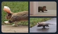 On a retrouvé les animaux de compagnie d'Offerus