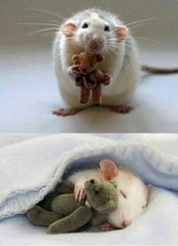 Ratoune et sa peluche