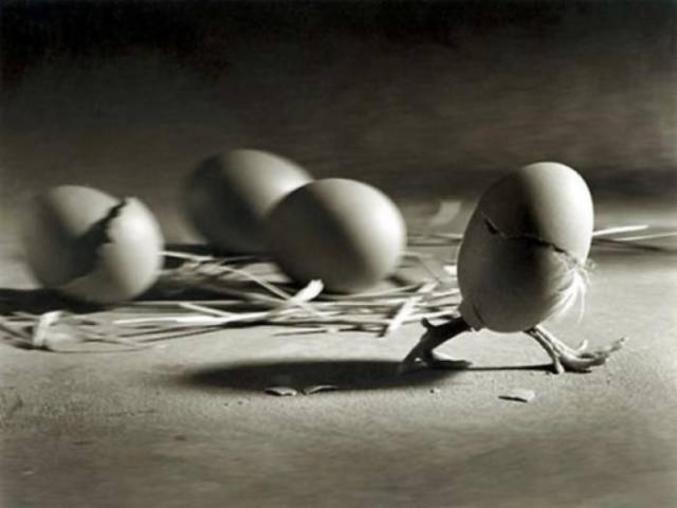 kan tu te poses la question de qui de l'œuf ou la poule.