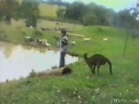 Connard de kangourou