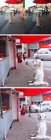 Un chien quémande devant un restaurant