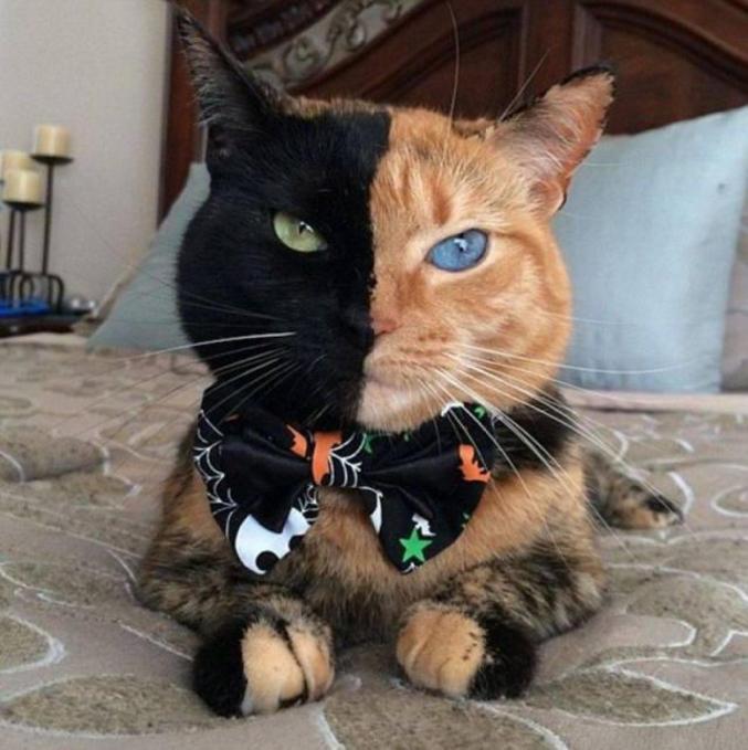 Le chat aux deux visages.