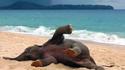Eléphanteau heureux sur une plage